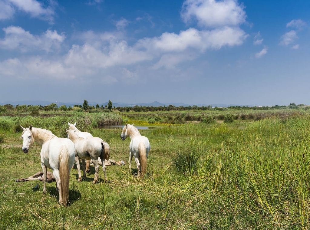 outdoor meeting Barcelona Natrual park horses